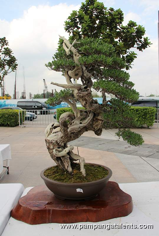 literati bantigue bonsai