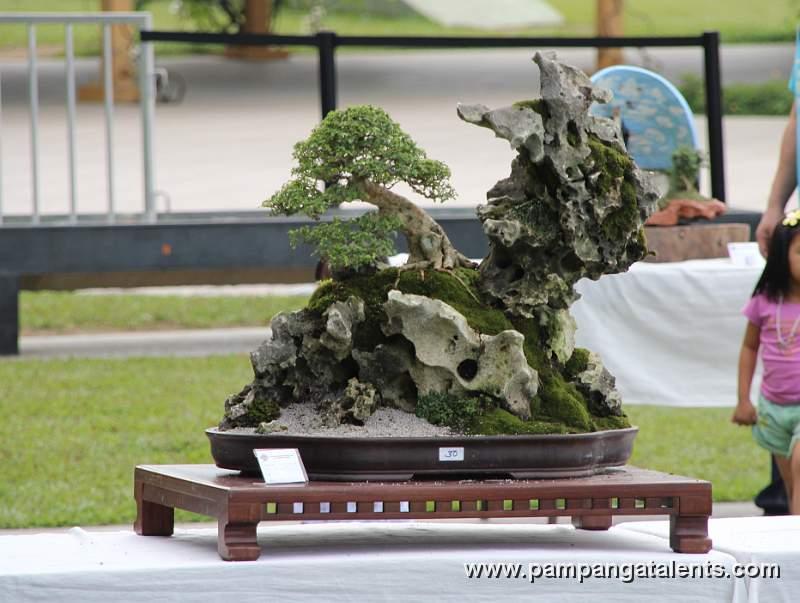 Penjing Landscape Bonsai