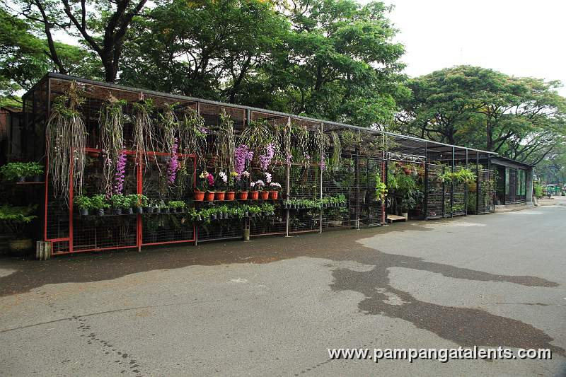 Plant city nursery thenurseries for Earl may nursery garden center